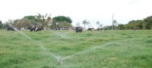 pastejo-rotativo-irrigado-vianopolis-2105-copy.jpg.465x211_q85_crop_upscale-True
