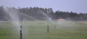 Modelo de irrigação em pastagem