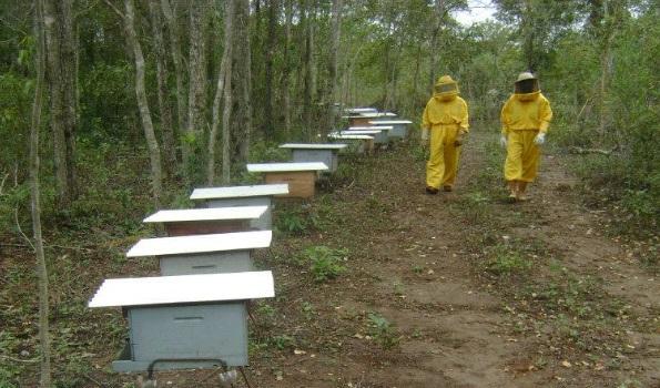 Resultado de imagem para roupa de apicultor